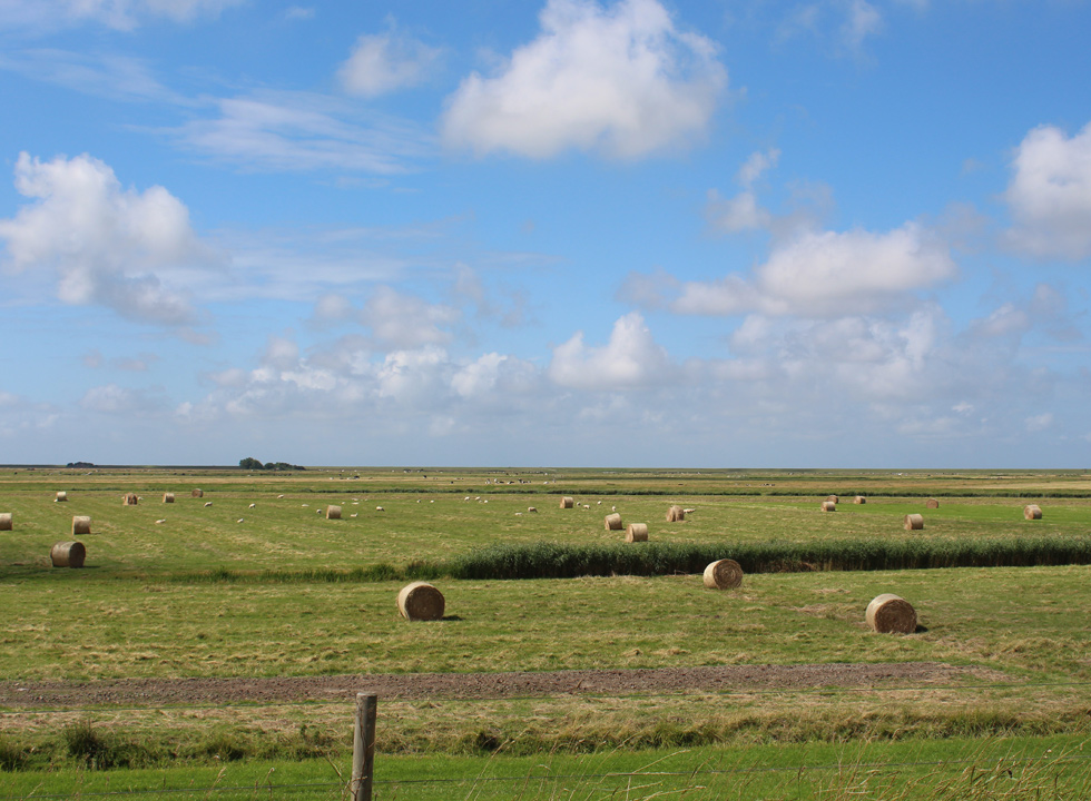 Bales of hay on the flat fields, which surround Rudbøl