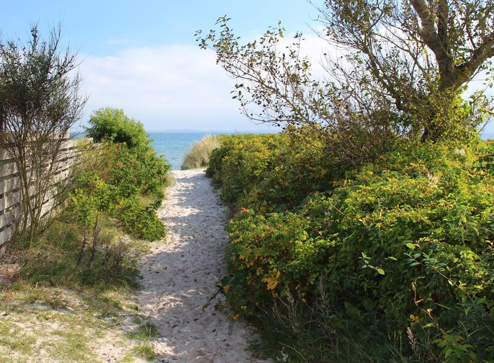 Path to the beach in Saksild between the holiday homes