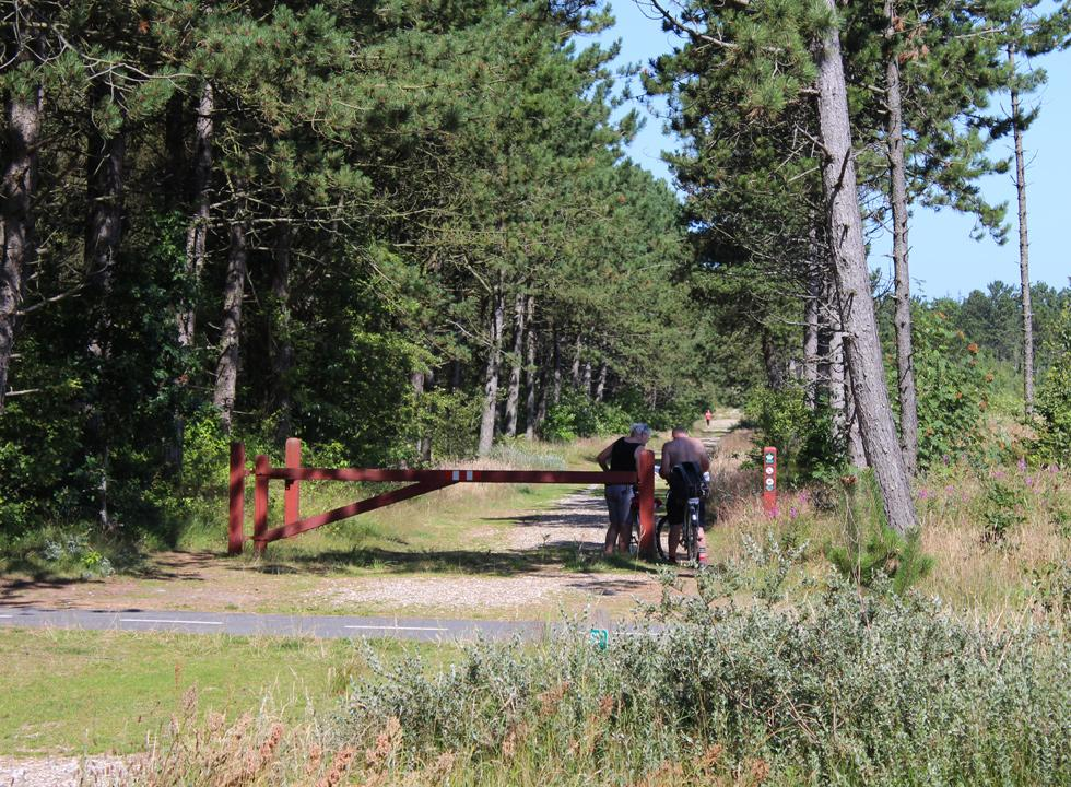 The forest area behind the holiday home area in Saltum is ideal for hikes and bicycle rides