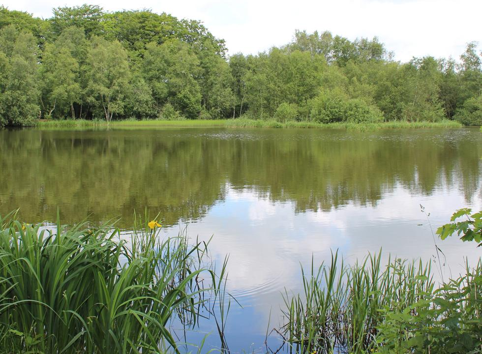 One of the fine fishponds near Sdr. Felding