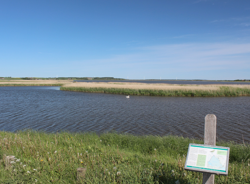 Wetlands with a rich bird life near the holiday home area in Sennels