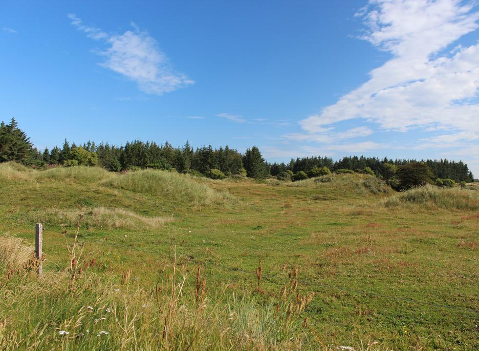 Green inland dunes and plantation behind the holiday homes in Skallerup