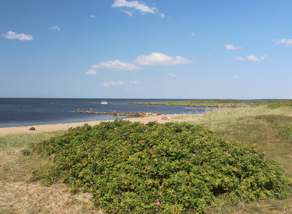 The lovely and child-friendly beach is situated close to the holiday homes in Skaven Strand