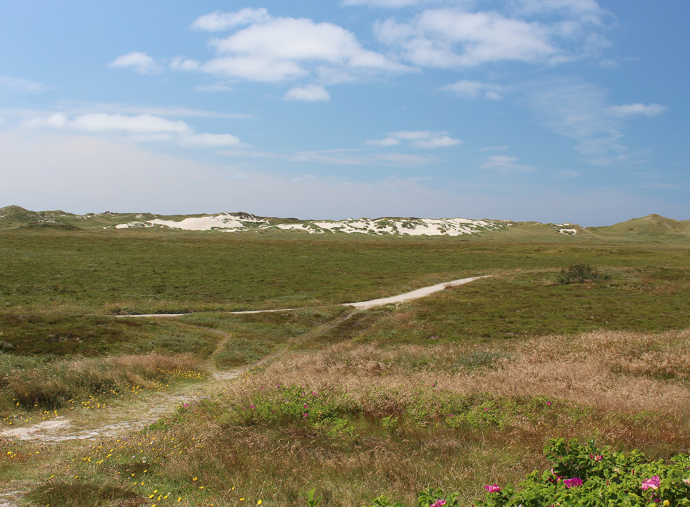 On the way towards the beach and the high dunes through a green nature area in Skodbjerge