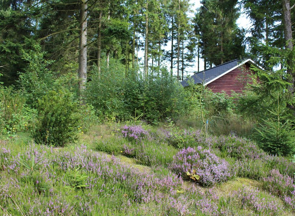The holiday homes in Skygge are surrounded by beautiful and unspoiled nature