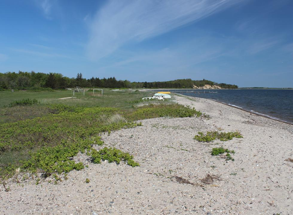 Green spaces and forest behind the beach in Søndbjerg Strand