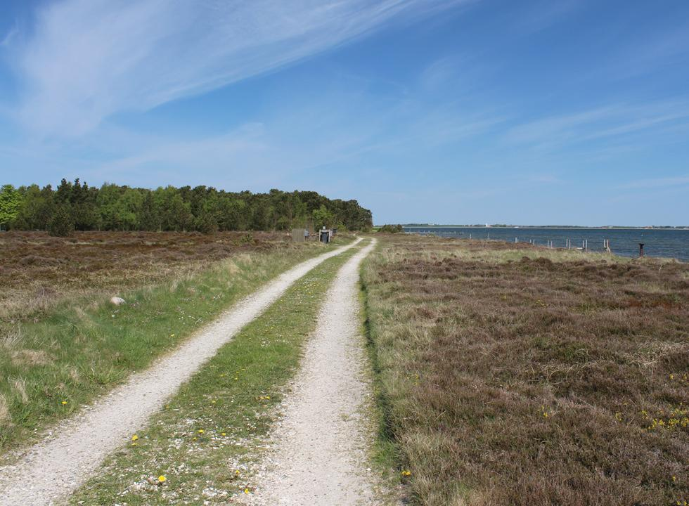 Forest and beautiful heather areas behind the shore in Søndbjerg Strand