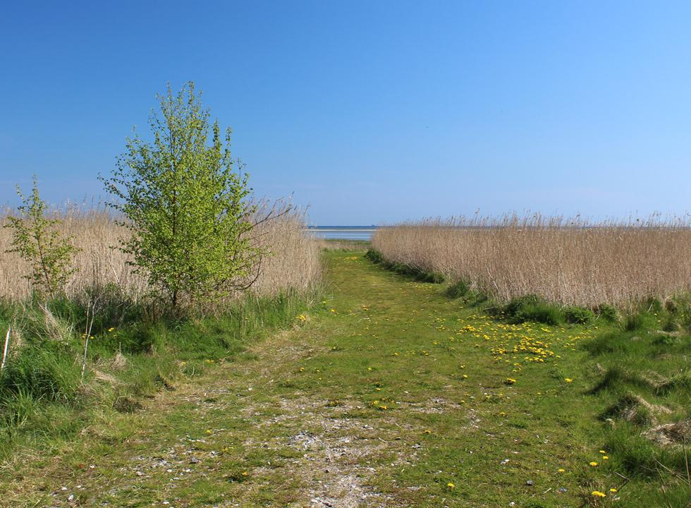 Path from the holiday homes to the shore in St. Sjørup