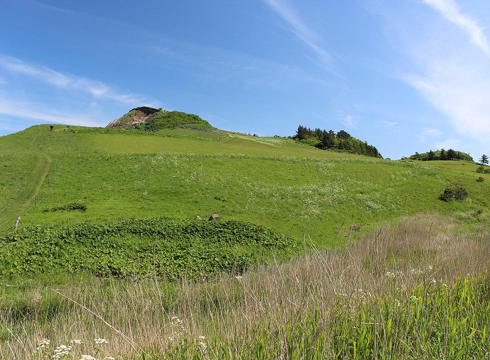 You can follow paths in the preserved area on the molar clay hill, Hanklit, near Sundby Mors