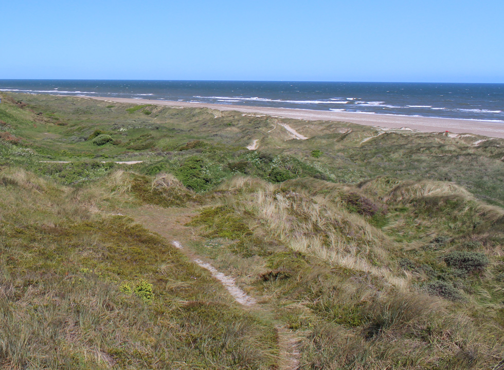 Hilly dune landscapes with paths behind the bathing beach in Svinkløv