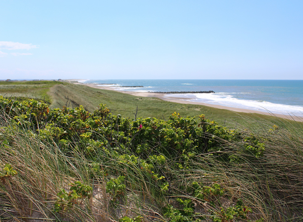 View towards south from the dunes in Trans
