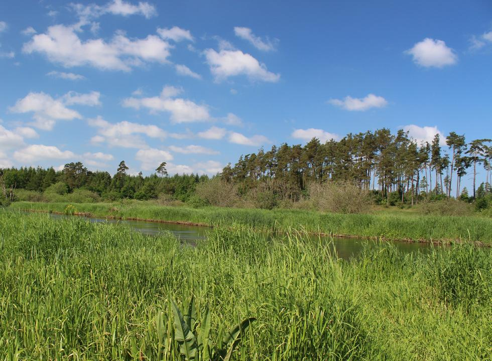 View of the stream, Gudenåen, which is surrounded by forest and reeds, behind the holiday homes in Truust