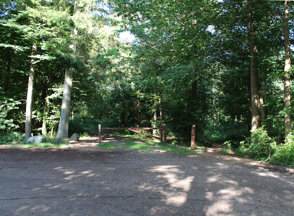 Forest area with walking paths at the end of the holiday home road in Udby