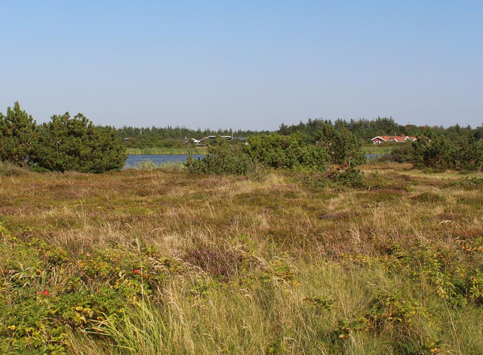 Scenic area with lake and holiday homes between the beach and the dune plantation in Vejers