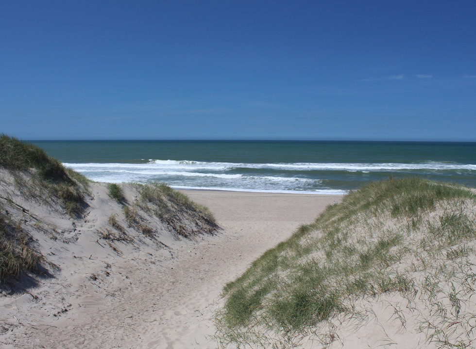 You have access to the North Sea beach in Vejlby Klit through the high dunes