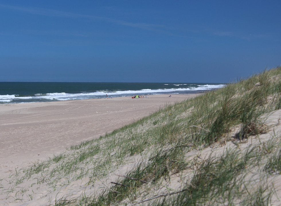 The lovely sandy beach in Vejlby Klit is sheltered by high dunes