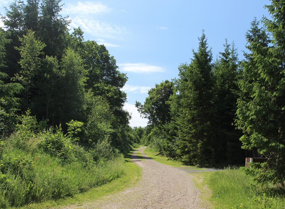 Cosy road with holiday home and high sheltering trees in the holiday area Vesterlund